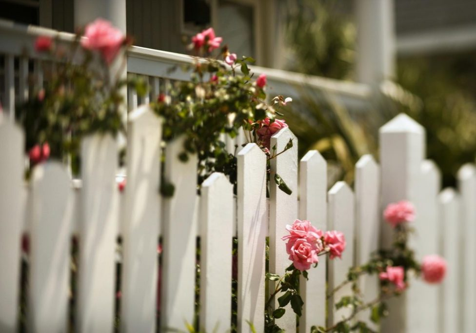 flowers in the fences